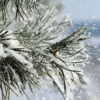 пушистый снег :: Наталья Барышева
