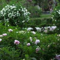А я смотрел на то цветенье и рад был каждому мгновенью... :: Денис Быстров