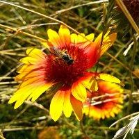 Полевые цветы-4 :: Владимир Бровко