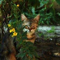 подмигивающая кошка :: Вадим Виловатый