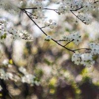 Весна :: S. Basov