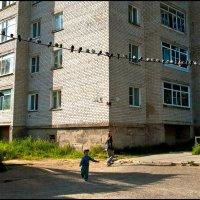 Голуби на проводах :: Валентин Кузьмин