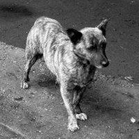 Бедный пёс :: Николай Филоненко
