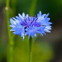 Цветы в нашем саду (этюд 5) :: Константин Жирнов