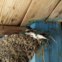 Ласточкино гнездо :: Геннадий Кульков