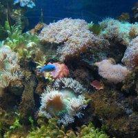 Подводный мир :: Natalia Harries