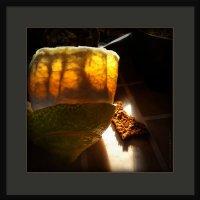 Немного солнца на обеденном столе :: Станислав Лебединский
