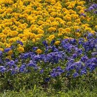 цветочки :: Яков Реймер