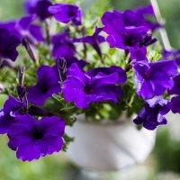 Цветы :: Евгений Мельников