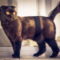 Cat :: Евгений Бубнов