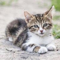 Котёнок :: S. Basov
