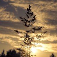 Дерево :: Аня Шаевская