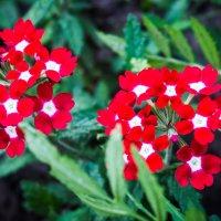 Цветы :: Владимир Сквирский