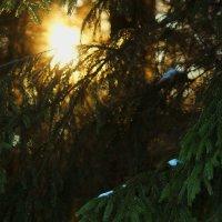 Зимнее солнце :: Мария Синельникова