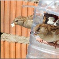 не тесно! :: linnud