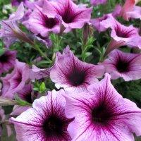Цветы :: Наталья Пономаренко