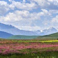Альпийские луга :: Сергей Рычков