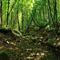 В лесу :: Александр Тышко