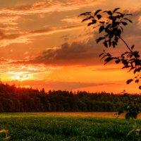 Над кукурузным полем :: Андрей Куприянов