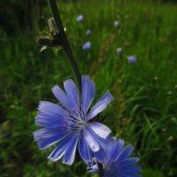 Полевые цветы :: Андрей Лукьянов