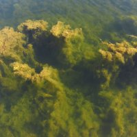 Мир подводный :: Андрей Лукьянов