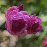 Цветочный хоровод-260. :: Руслан Грицунь