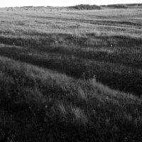 Морщины земли :: Николай Филоненко