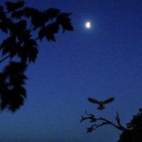 Ночной дозор :: Ринат Валиев