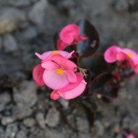 Цветочный хоровод-264. :: Руслан Грицунь