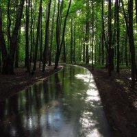 В парке после дождя :: Андрей Лукьянов