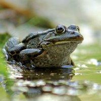 Я не жаба - я царевна :: Alexander