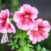 flower_5 :: Trage