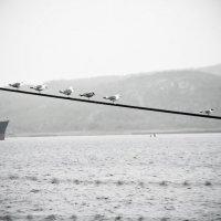Музыка моря :: Наталья Корнийченко