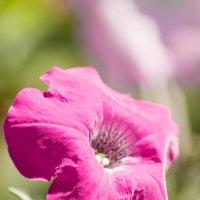 flower_10 :: Trage
