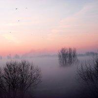 Туман :: Игорь Хижняк
