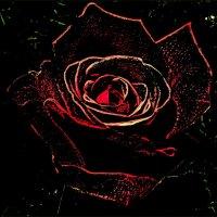 Очертания розы :: Нина Корешкова