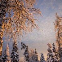 Зимний лес :: Андрей Колчин