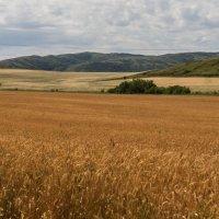 пшеница :: lev