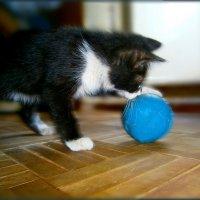 Кто со мной в футбол....?????????! :: Людмила Богданова (Скачко)