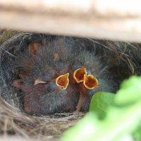 маленькие птички) :: Вилена Романова