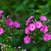 домашние цветы :: Горный турист Иван Иванов