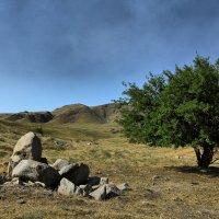Там, где кончается степь начинаются горы :: Сергей Мурзин