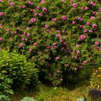 Сад :: Валентин Кузьмин