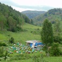 Пасека в горах. :: Мила Бовкун