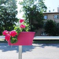 Цветы в Дагде (1) :: Юрий Бондер