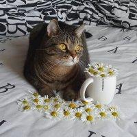 Cat :: Ruslan Kruglov