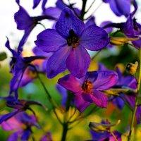 Волшебный цвет :: Сергей
