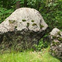 Живые камни. :: сергей лебедев