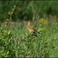 А одна маленькая но очень гордая птичка...не хочет фотографироваться. :: Anatol Livtsov