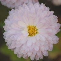 Цветочный хоровод-276. :: Руслан Грицунь
